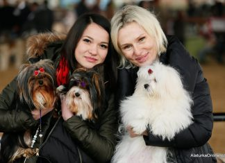 Dogs Competition in Izmir (11)